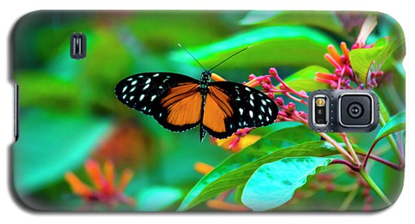 Tiger Longwing Butterfly Galaxy S5 Case by David Morefield