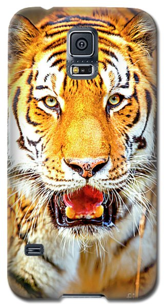 Tiger On The Hunt Galaxy S5 Case