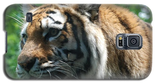 Galaxy S5 Case featuring the photograph Tiger Profile by Richard Bryce and Family