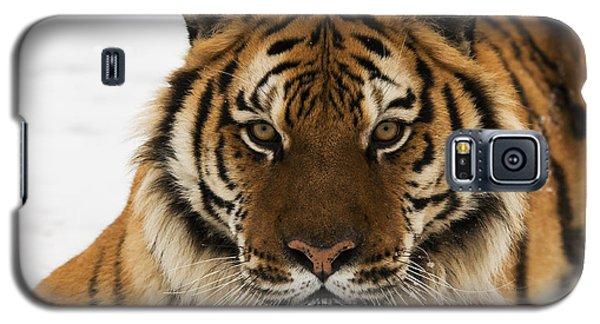 Tiger Stare Galaxy S5 Case