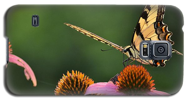 Tiger Swallowtail Galaxy S5 Case by JD Grimes