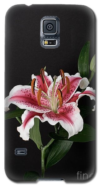 Tiger Woods Lily Galaxy S5 Case