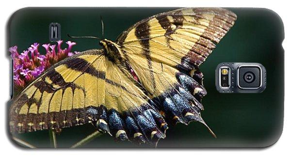 Galaxy S5 Case featuring the photograph Tigress And Verbena by Byron Varvarigos