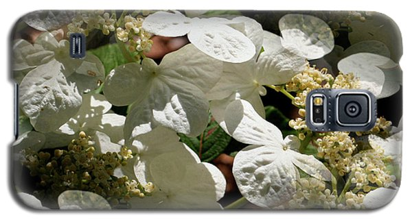 Galaxy S5 Case featuring the photograph Tiled White Lace Cap Hydrangeas by Smilin Eyes  Treasures