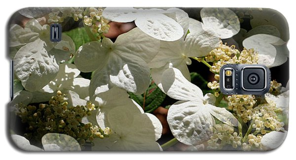 Tiled White Lace Cap Hydrangeas Galaxy S5 Case by Smilin Eyes  Treasures