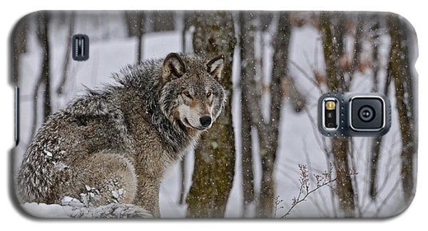 Galaxy S5 Case featuring the photograph Timber Wolf In Winter by Michael Cummings
