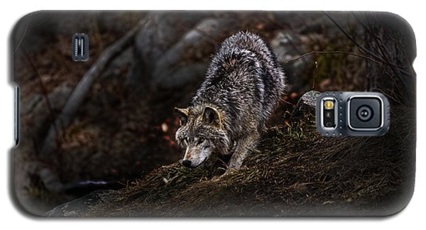 Timber Wolf On Hill Galaxy S5 Case
