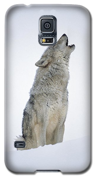 Timber Wolf Portrait Howling In Snow Galaxy S5 Case