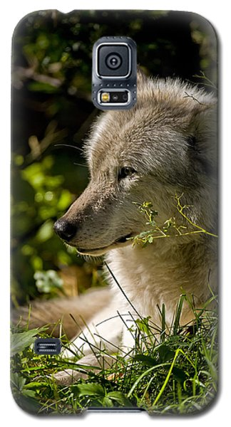 Galaxy S5 Case featuring the photograph Timber Wolf Portrait by Michael Cummings