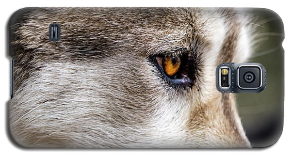 Galaxy S5 Case featuring the photograph Timber Wolf Stare by Teri Virbickis
