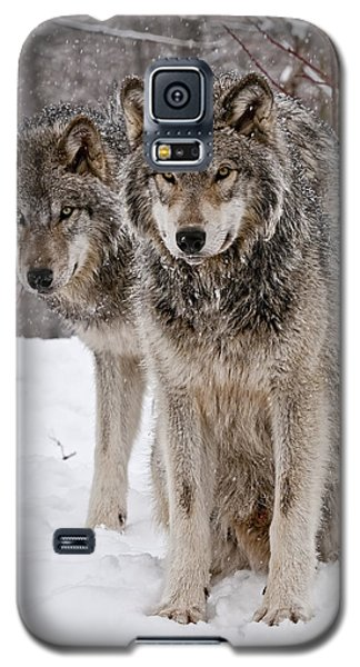 Galaxy S5 Case featuring the photograph Timber Wolves In Winter by Michael Cummings
