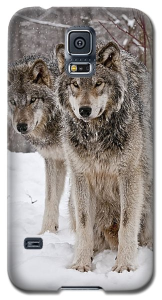 Timber Wolves In Winter Galaxy S5 Case by Michael Cummings