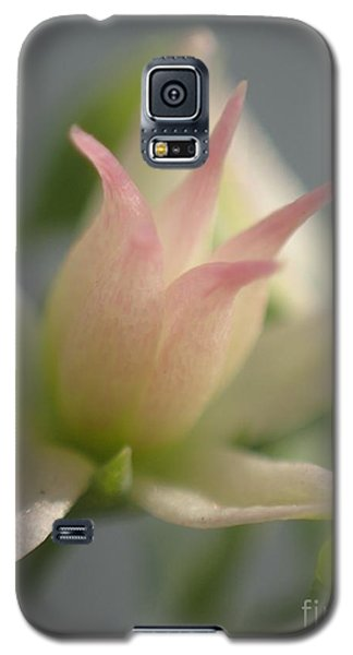 Tiny Crown Galaxy S5 Case