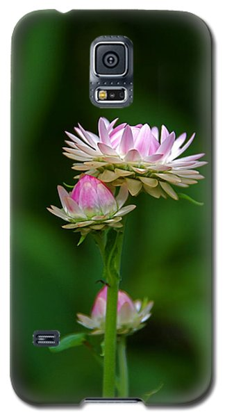 Galaxy S5 Case featuring the photograph Tiny Dahlias Green Aura by Byron Varvarigos