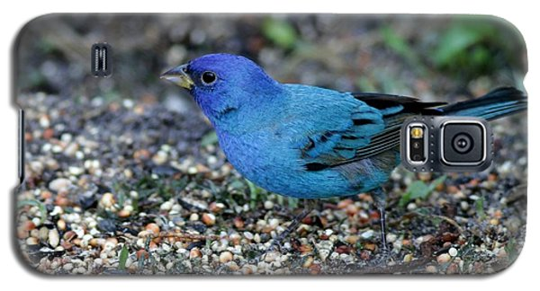 Tiny Indigo Bunting Galaxy S5 Case
