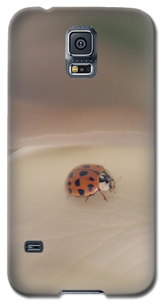Tiny Lady On White Rose Galaxy S5 Case by The Art Of Marilyn Ridoutt-Greene