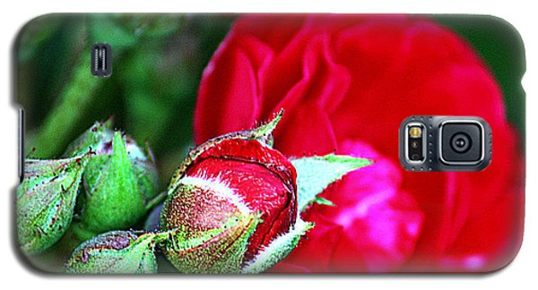 Galaxy S5 Case featuring the photograph Tiny Red Rosebuds by KayeCee Spain