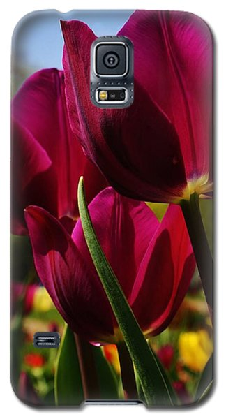 Galaxy S5 Case featuring the photograph Tip Toe Through The Tulips by Bruce Bley