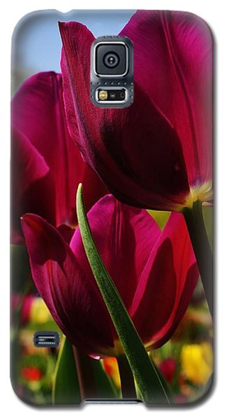 Tip Toe Through The Tulips Galaxy S5 Case