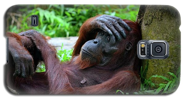 Tired Female Orangutan Ape Rests Against Tree With Hand On Her Head Galaxy S5 Case