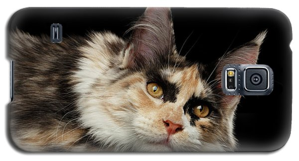 Tired Maine Coon Cat Lie On Black Background Galaxy S5 Case