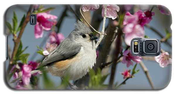 Titmouse And Peach Blossoms Galaxy S5 Case