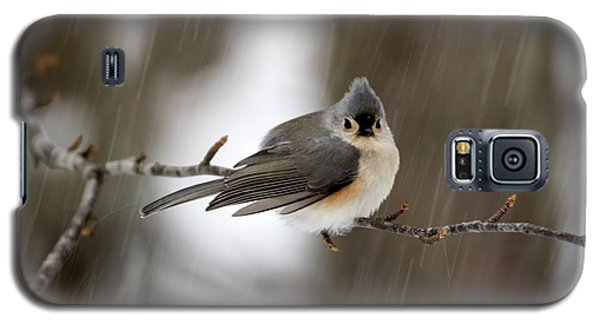Titmouse During Snow Storm Galaxy S5 Case