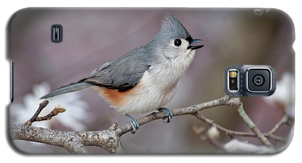 Galaxy S5 Case featuring the photograph Titmouse Song - D010023 by Daniel Dempster