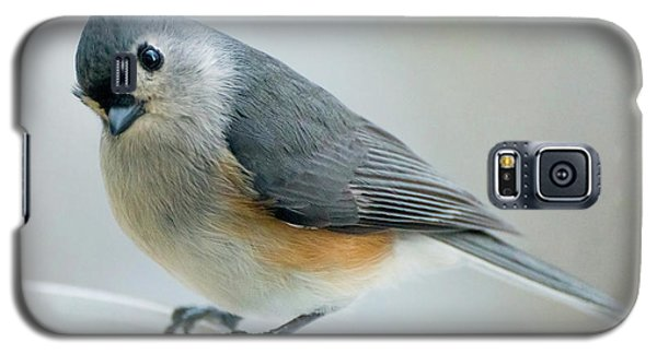 Titmouse With Walnuts Galaxy S5 Case
