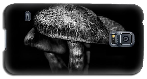 Toadstools On A Toronto Trail 1 Galaxy S5 Case