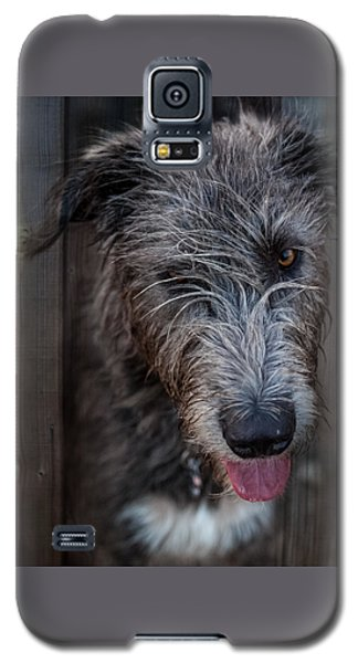 Toby, The Irish Wolfhound Pup Galaxy S5 Case