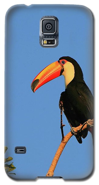 Toco Toucan Galaxy S5 Case by Bruce J Robinson