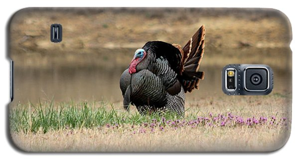 Tom Turkey At Pond Galaxy S5 Case