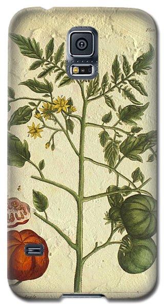 Tomato Plant Vintage Botanical Galaxy S5 Case
