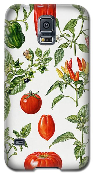 Tomatoes And Related Vegetables Galaxy S5 Case by Elizabeth Rice