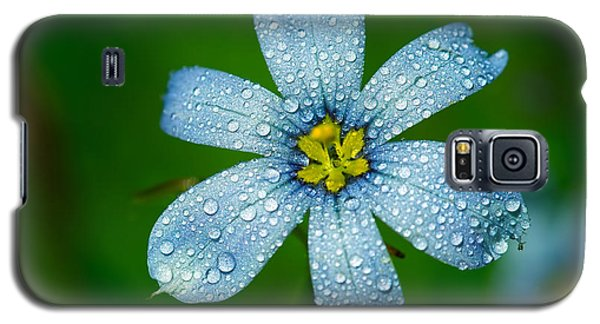 Top View Of A Blue Eyed Grass Flower Galaxy S5 Case