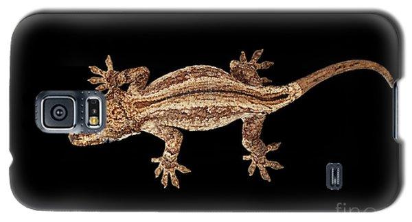 Top View Of Gargoyle Gecko, Rhacodactylus Auriculatus Staring Isolated On Black Background. Native T Galaxy S5 Case by Sergey Taran