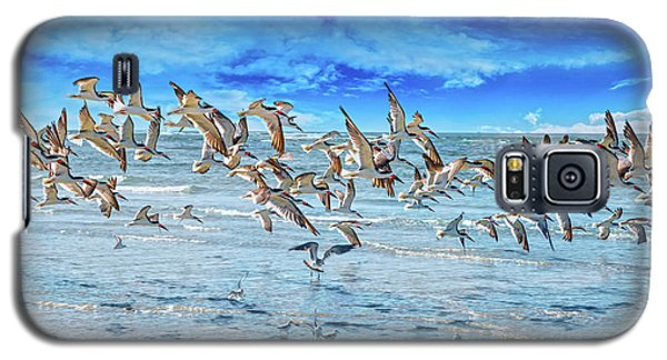 Topsail Skimmers Galaxy S5 Case