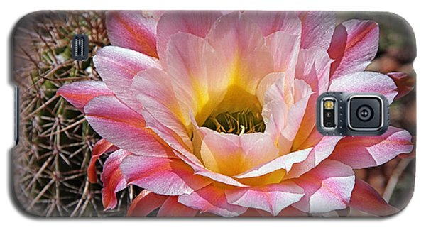 Galaxy S5 Case featuring the photograph Torch Cactus Flower by Elaine Malott