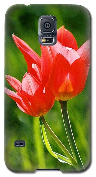 Toronto Tulip Galaxy S5 Case by Steve Karol