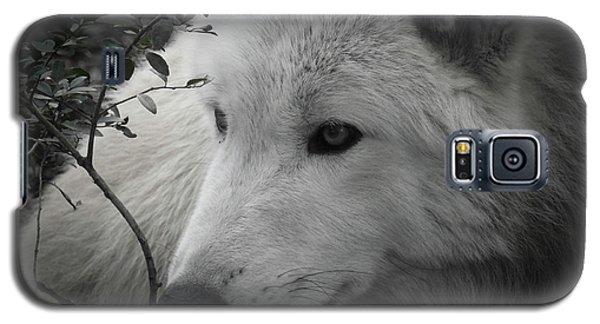 Totem, No. 24 Galaxy S5 Case