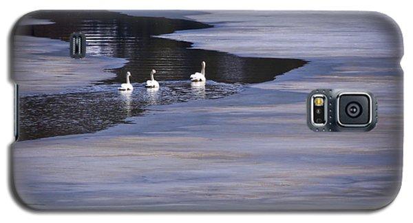 Tourist Swans Galaxy S5 Case