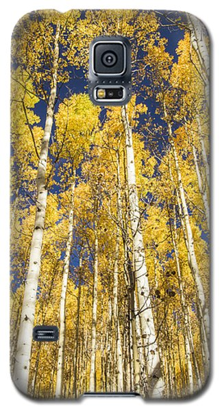 Towering Aspens Galaxy S5 Case by Phyllis Peterson