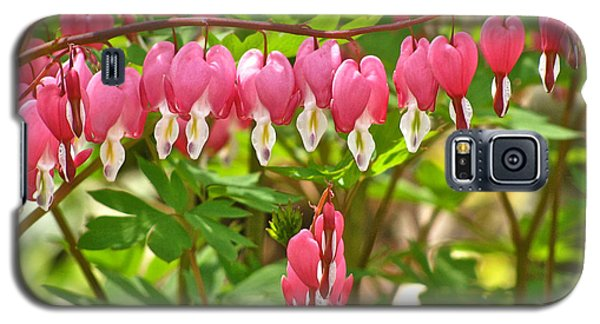 Trail Of Bleeding Hearts Galaxy S5 Case