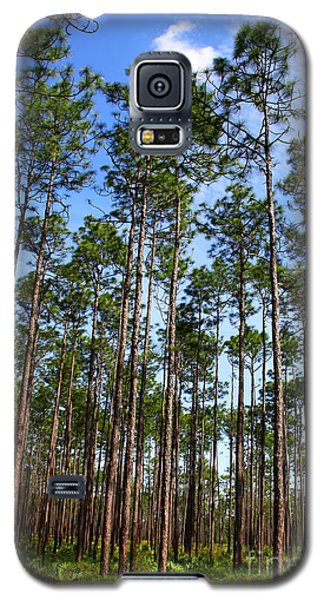 Trail Through The Pine Forest Galaxy S5 Case