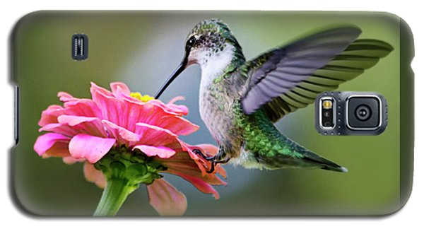 Tranquil Joy Hummingbird Square Galaxy S5 Case by Christina Rollo
