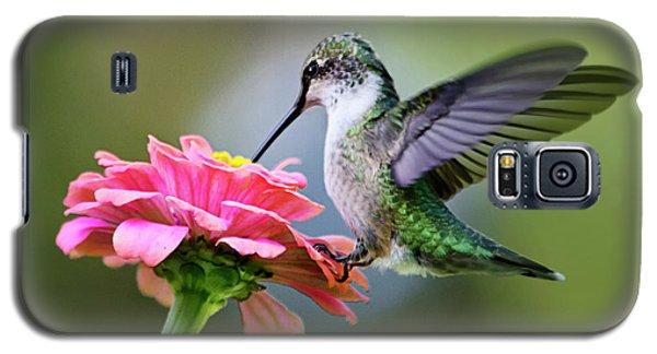 Tranquil Joy Hummingbird Square Galaxy S5 Case