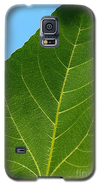 Transparence 18 Galaxy S5 Case