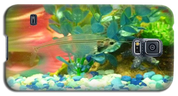 Galaxy S5 Case featuring the photograph Transparent Catfish by Barbara Yearty