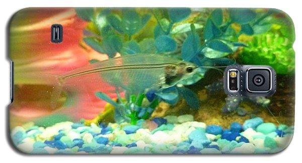 Transparent Catfish Galaxy S5 Case